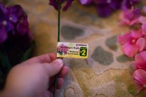 flower-12